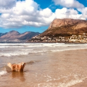 Image of Jenna the dog on Fish Hoek beach
