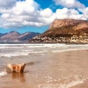 Image of Jenna the dog on Fish Hoek beach